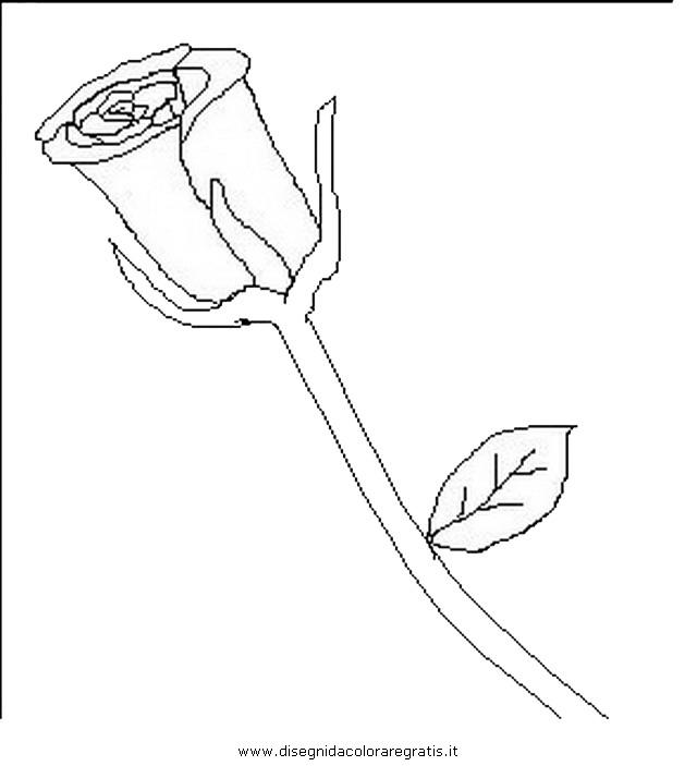 natura/fiori/fiori_fiore_011.JPG