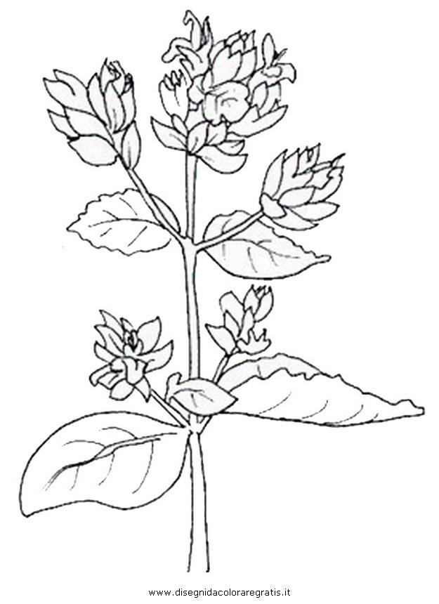natura/fiori/fiori_fiore_017.JPG
