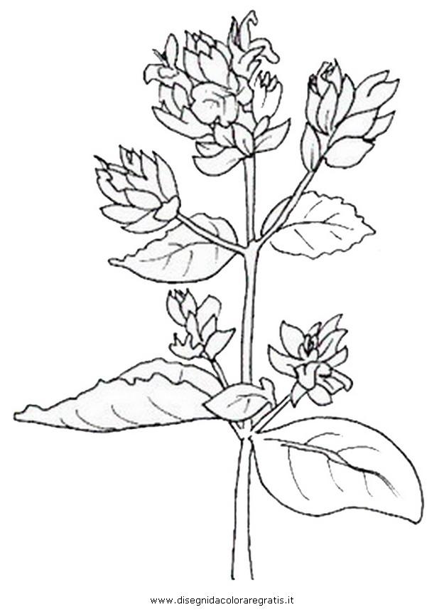 natura/fiori/fiori_fiore_018.JPG