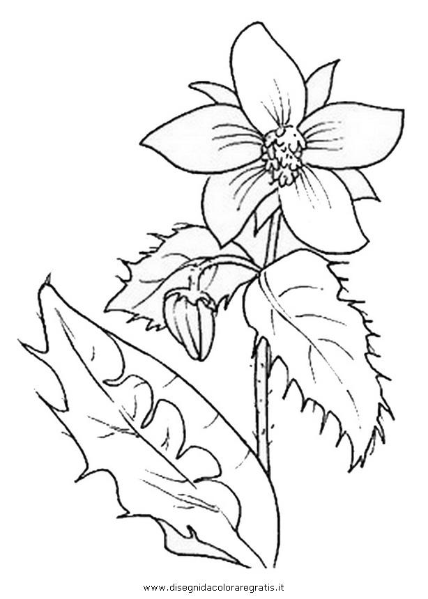 natura/fiori/fiori_fiore_021.JPG