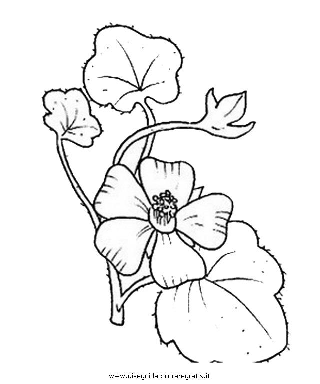 natura/fiori/fiori_fiore_023.JPG