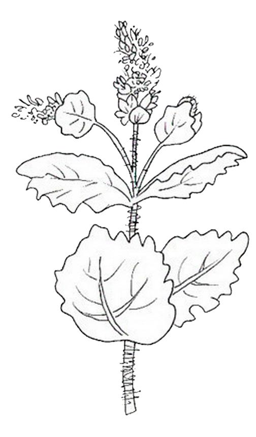 natura/fiori/fiori_fiore_025.JPG