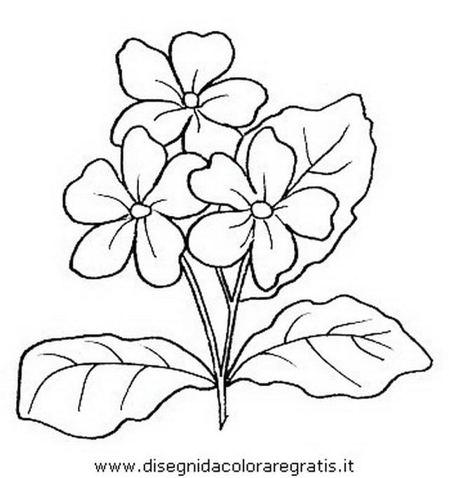 natura/fiori/fiori_fiore_027.JPG