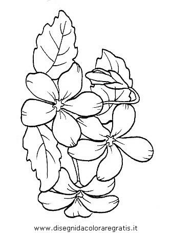 natura/fiori/fiori_fiore_029.JPG