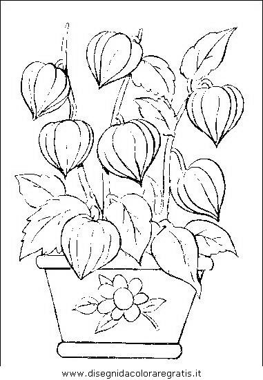 natura/fiori/fiori_fiore_040.JPG