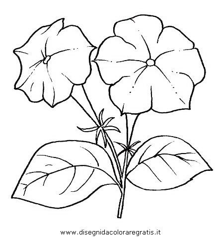 natura/fiori/fiori_fiore_041.JPG