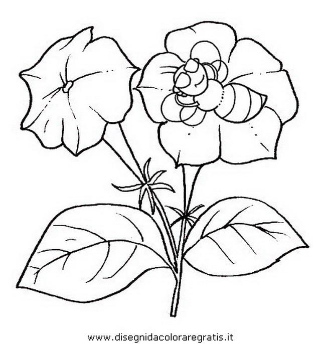 natura/fiori/fiori_fiore_042.JPG