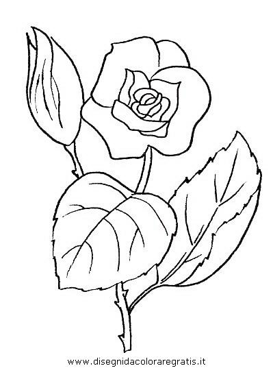 natura/fiori/fiori_fiore_044.JPG