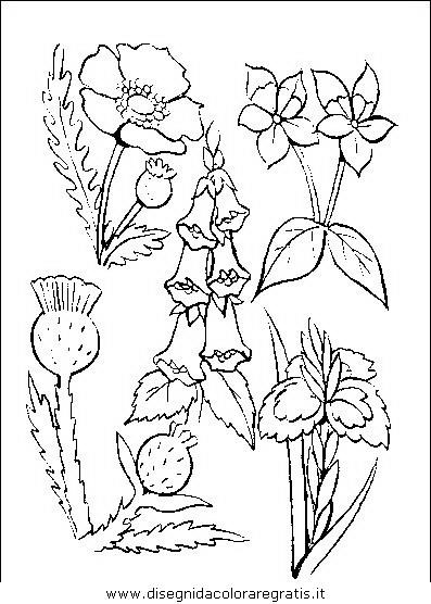 natura/fiori/fiori_fiore_046.JPG