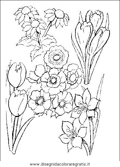 natura/fiori/fiori_fiore_049.JPG