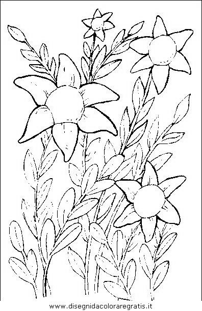 natura/fiori/fiori_fiore_053.JPG
