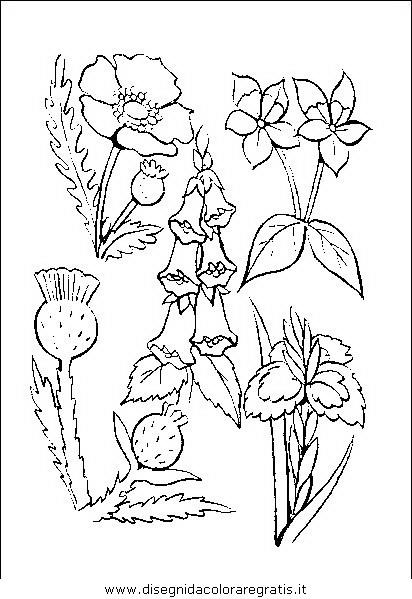 natura/fiori/fiori_fiore_054.JPG