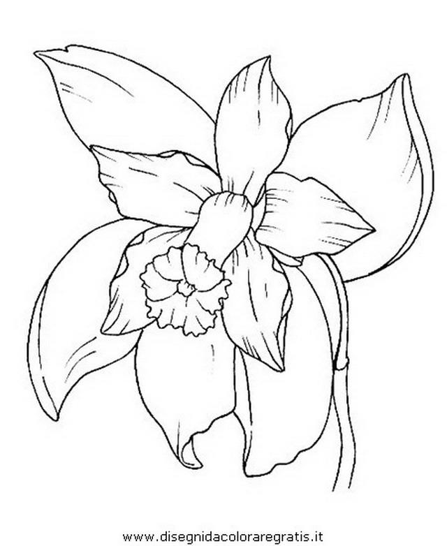 natura/fiori/fiori_fiore_056.JPG