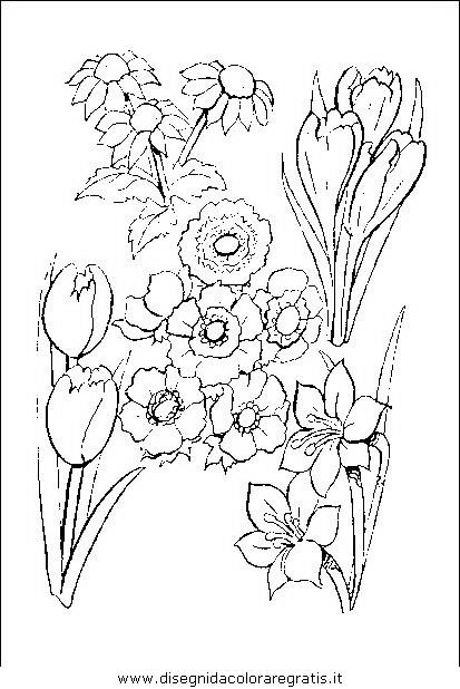 natura/fiori/fiori_fiore_060.JPG