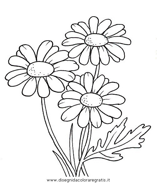 natura/fiori/fiori_fiore_065.JPG