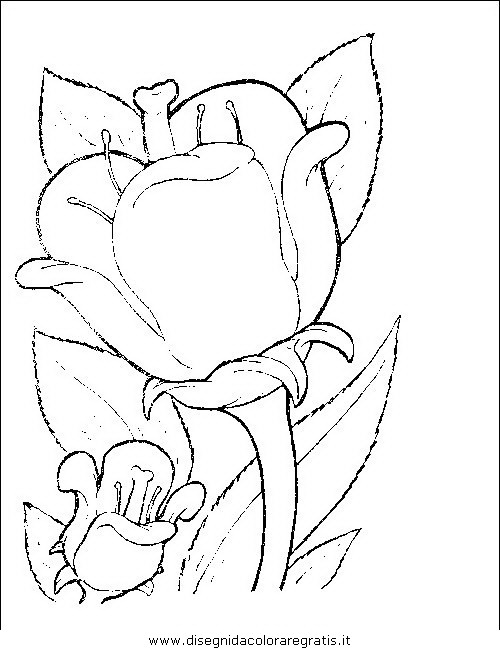 natura/fiori/fiori_fiore_070.JPG