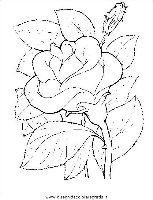 natura/fiori/fiori_fiore_071.JPG