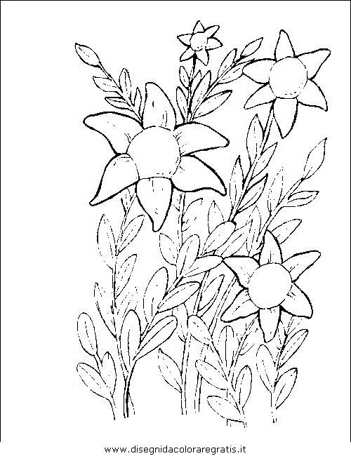natura/fiori/fiori_fiore_073.JPG