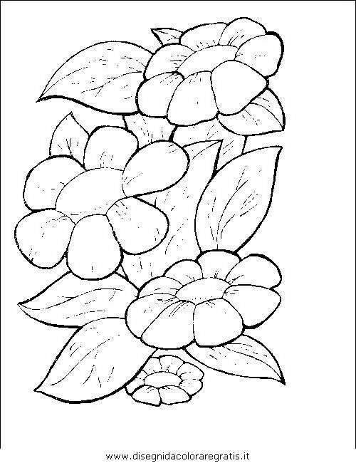 natura/fiori/fiori_fiore_074.JPG