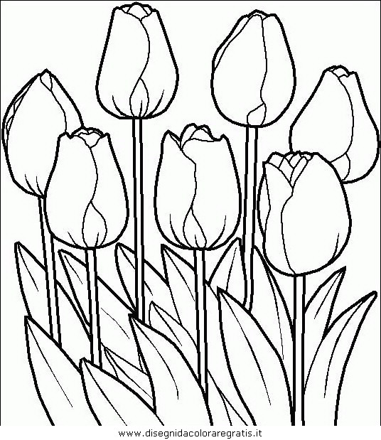 natura/fiori/fiori_fiore_078.JPG