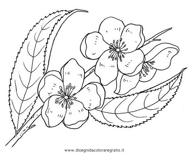 natura/fiori/fiori_fiore_079.JPG