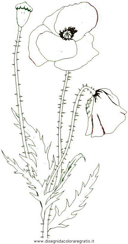 natura/fiori/fiori_fiore_084.JPG