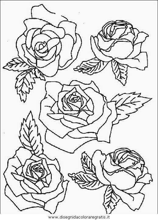 natura/fiori/fiori_fiore_089.JPG