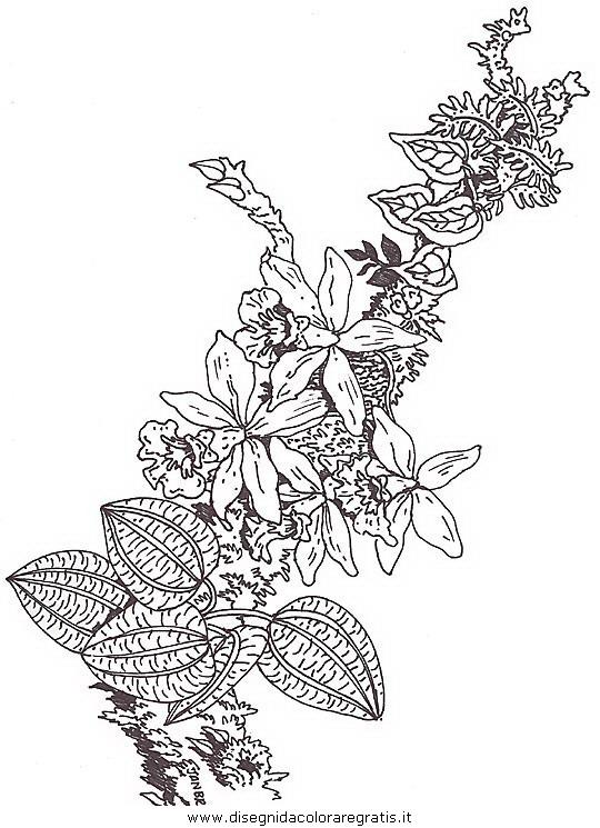 natura/fiori/fiori_fiore_093.JPG