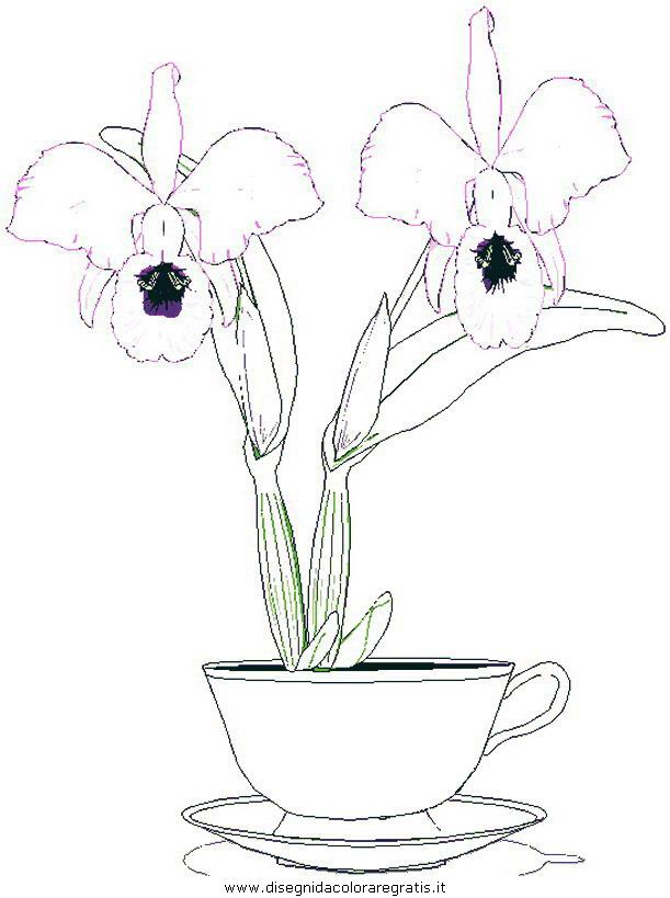 natura/fiori/fiori_fiore_104.JPG