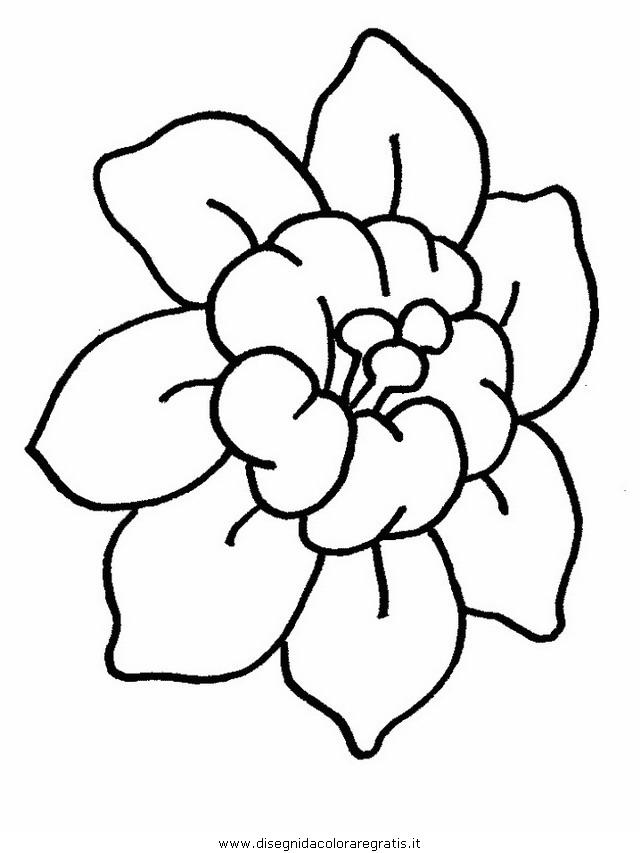 natura/fiori/fiori_fiore_105.JPG
