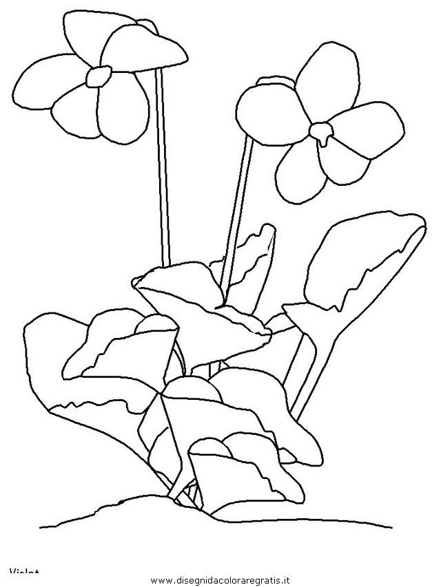 natura/fiori/fiori_fiore_106.JPG