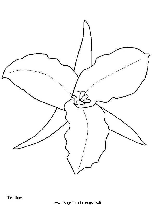 natura/fiori/fiori_fiore_110.JPG