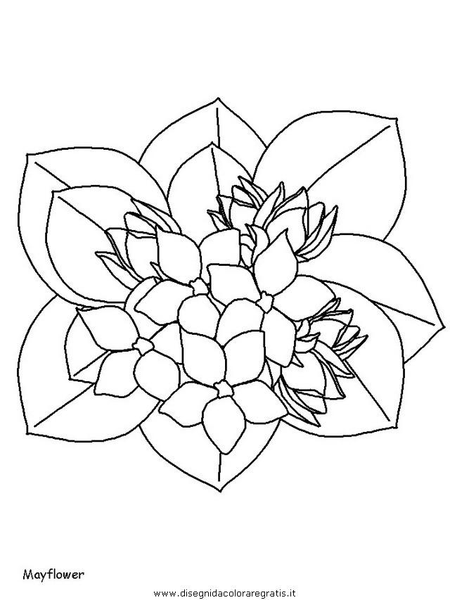 natura/fiori/fiori_fiore_111.JPG
