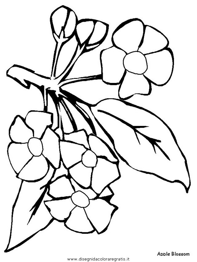 natura/fiori/fiori_fiore_122.JPG