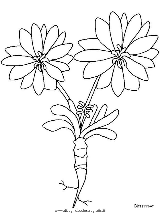 natura/fiori/fiori_fiore_123.JPG