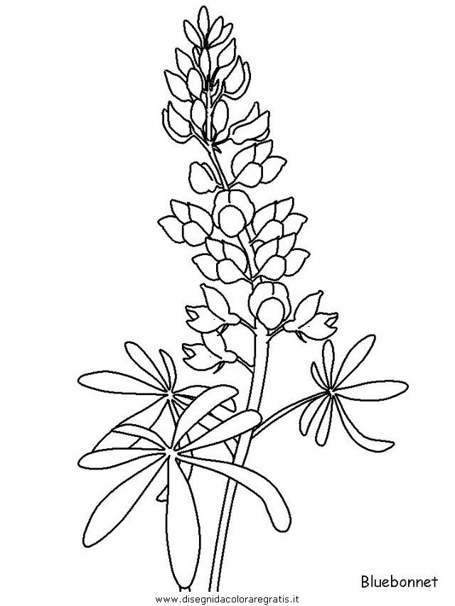 natura/fiori/fiori_fiore_124.JPG