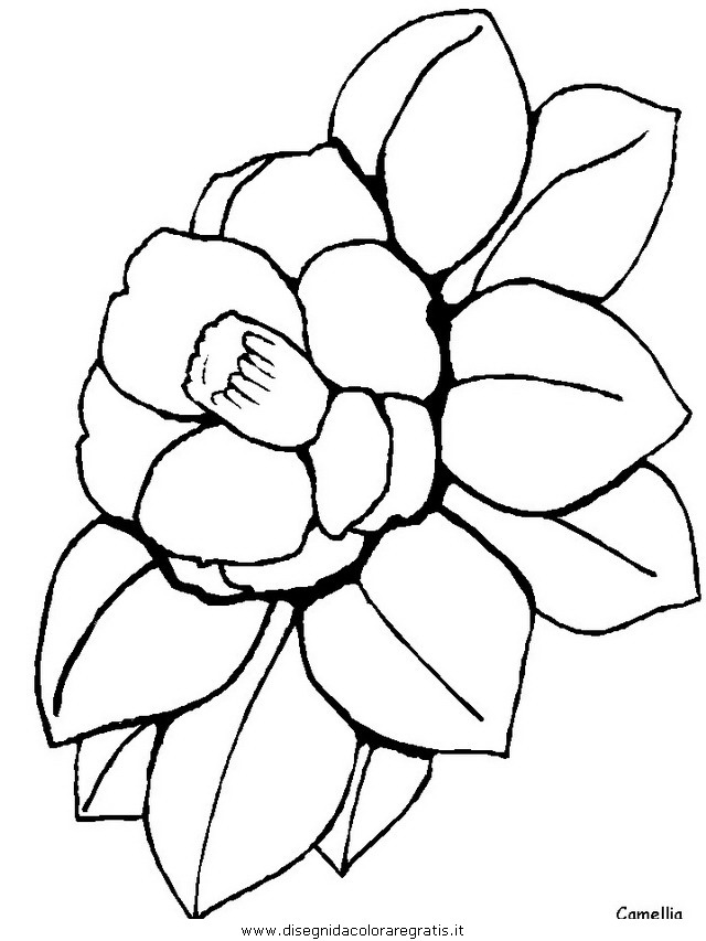 natura/fiori/fiori_fiore_127.JPG