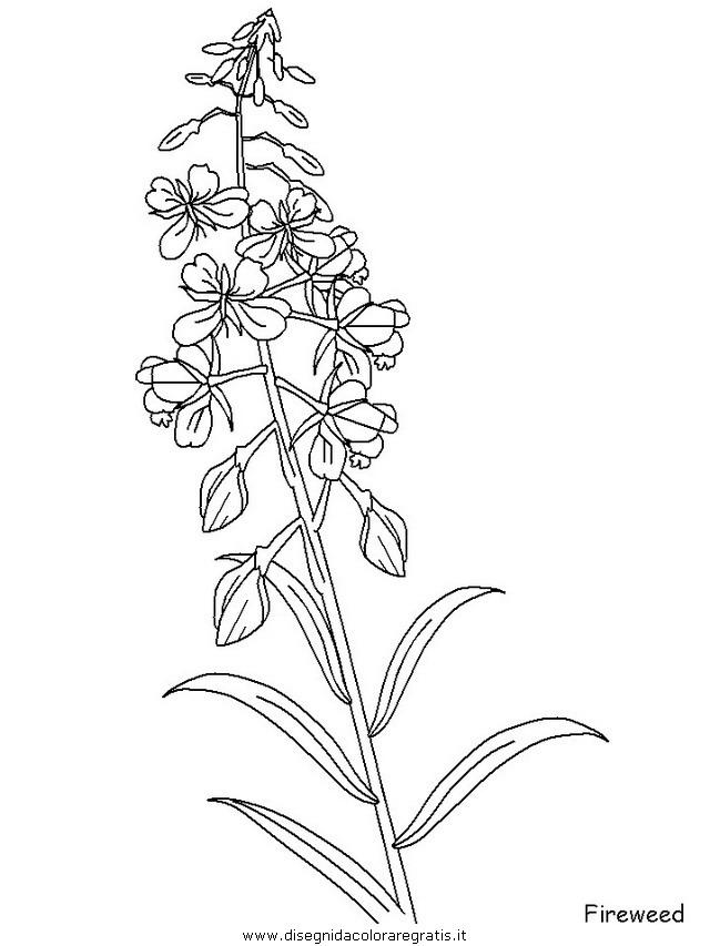 natura/fiori/fiori_fiore_132.JPG
