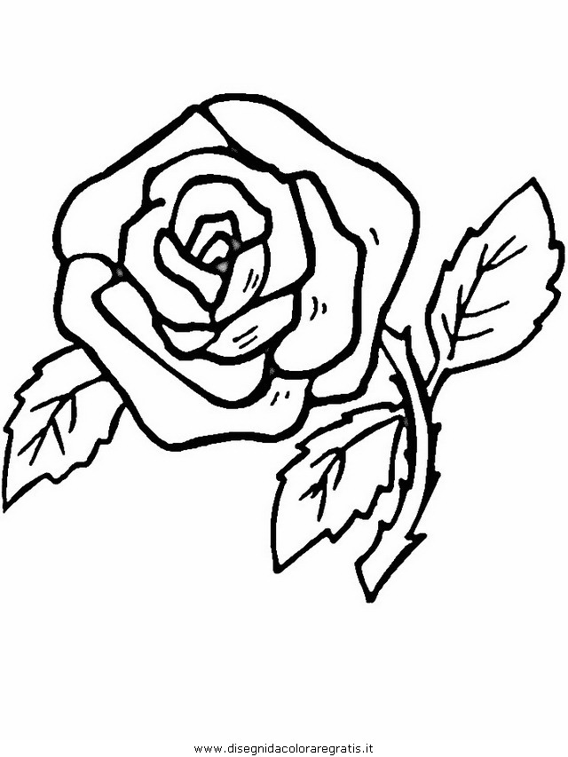 natura/fiori/fiori_fiore_140.JPG