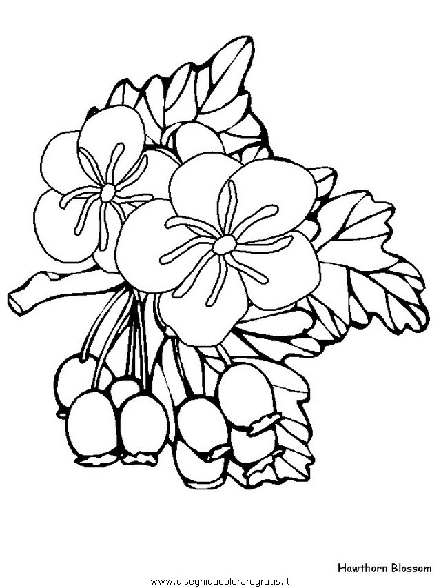 natura/fiori/fiori_fiore_152.JPG