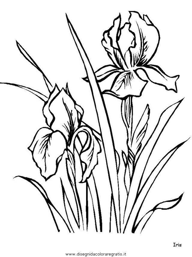 natura/fiori/fiori_fiore_155.JPG