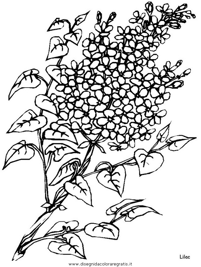 natura/fiori/fiori_fiore_156.JPG