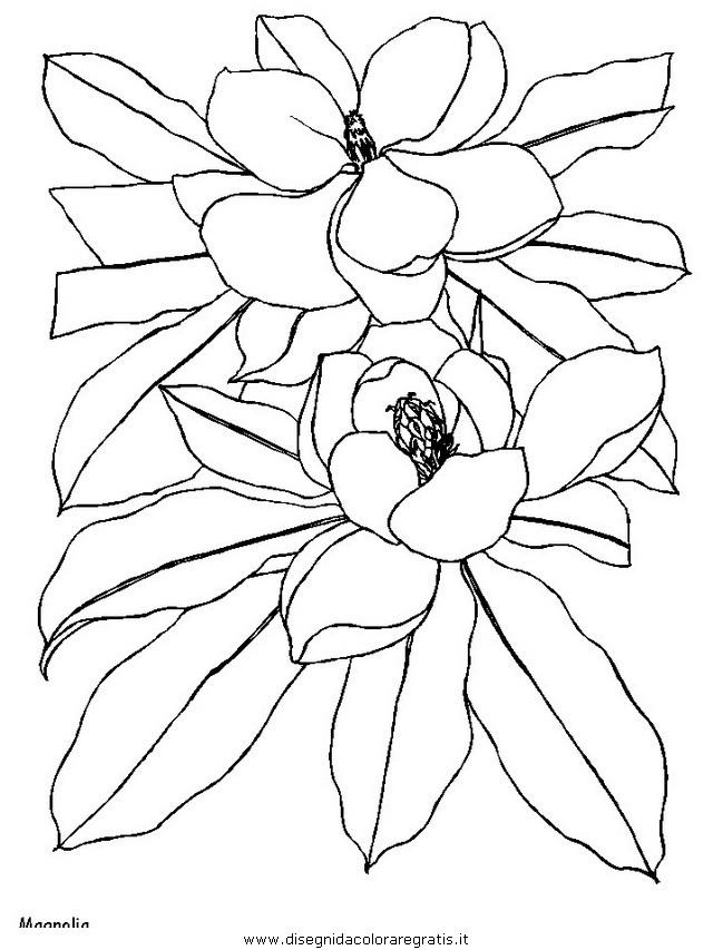 natura/fiori/fiori_fiore_157.JPG