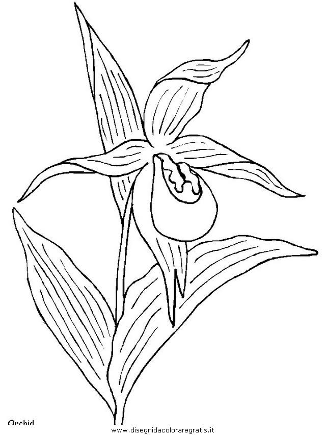 natura/fiori/fiori_fiore_160.JPG