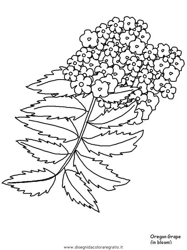 natura/fiori/fiori_fiore_161.JPG