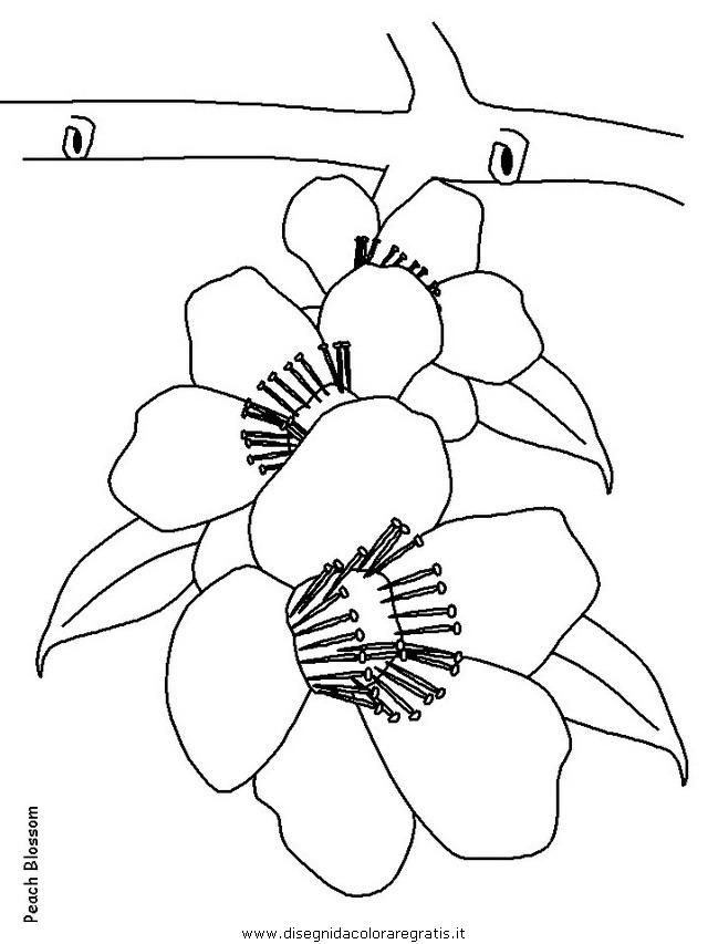 natura/fiori/fiori_fiore_163.JPG