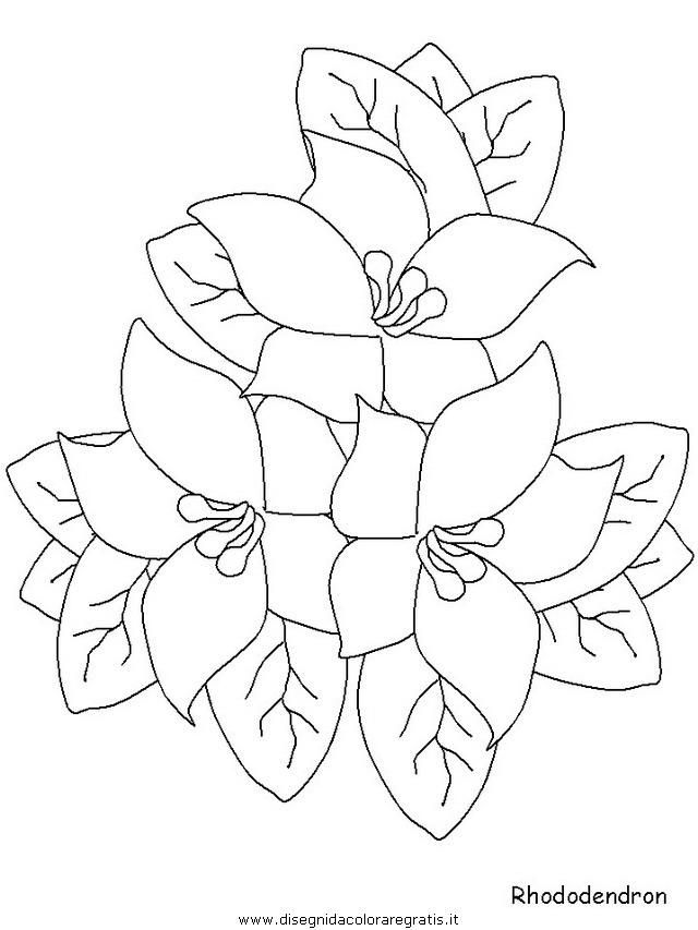natura/fiori/fiori_fiore_167.JPG