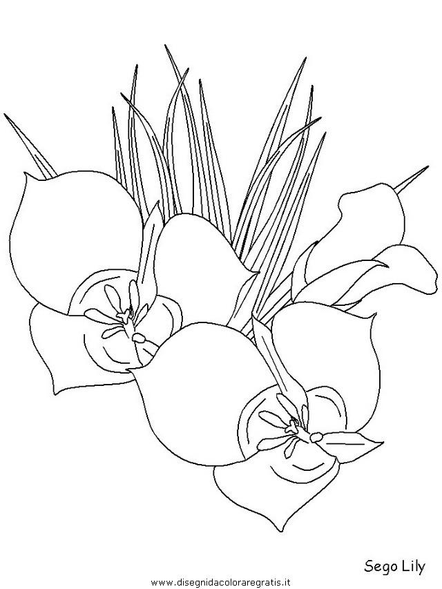 natura/fiori/fiori_fiore_170.JPG