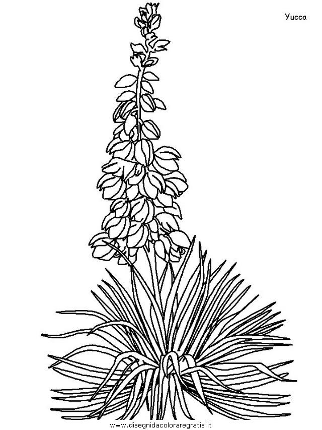natura/fiori/fiori_fiore_172.JPG