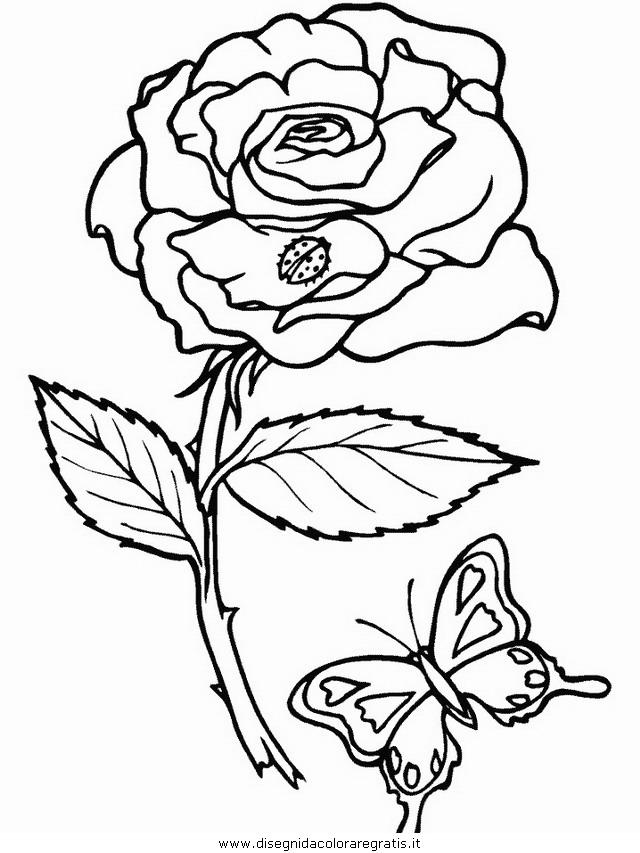 natura/fiori/fiori_fiore_173.JPG